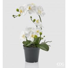 Orchidea, 43cm